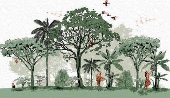 Restauracaoo ecologica sistemas agroflorestais