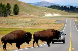 "<font face=""arial"" color=""#CF7829"">COMING IN 2015</font><br /> Yellowstone and Grand Tetons"