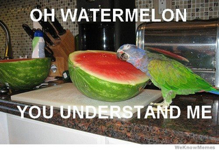 Oh-watermelon-you-understand-me