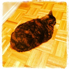 Img_0102_loaf_of_cat