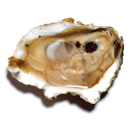 Check out these Oysters made in Topping, VA by Rappahannock River Oysters. Purchase to support 15 American workers. Gets you 700 Boom™ Points.