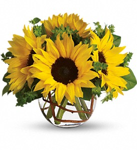 Sunflowers steal the show in this simple arrangement. Also featured: green bupleurum, salal leaves and a curly willow inside the glass bubble bowl.