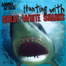 Hunting with Great White Sharks