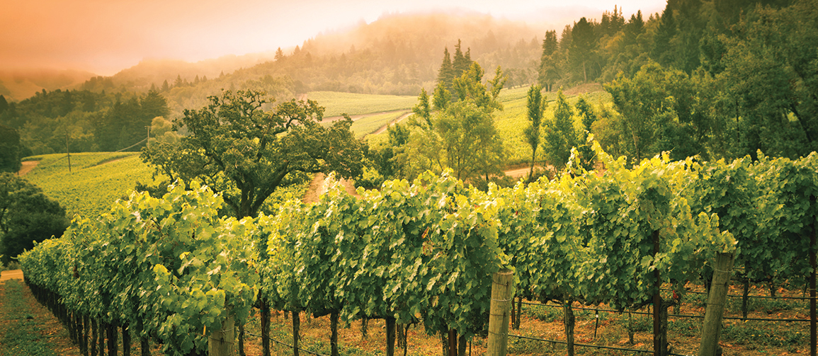 Napa Valley: Travel like an Insider