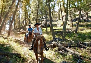 Yellowstone, Grand Teton, and Grand Canyon National Parks