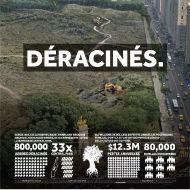 800000 Olive arbres déracinés, 33 Parcs centrale