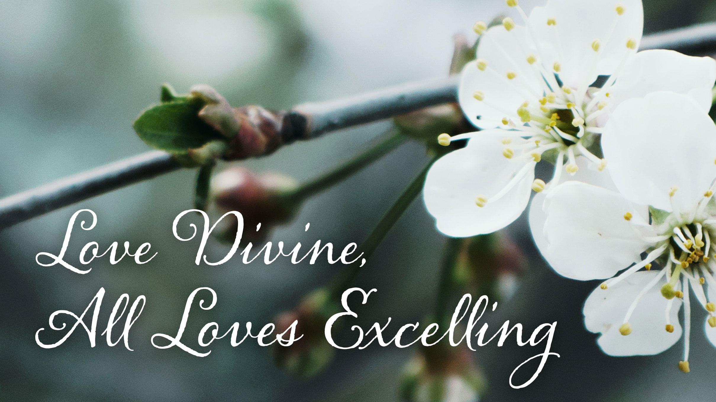 Love Divine, All Loves Excelling is a wonderful hymn for Lent or any time!