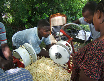 In the steps leading up to creating breadfruit flour, two men shred the