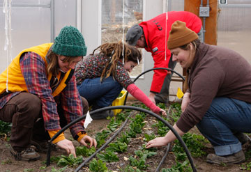 Students at Green Mountain College work in a campus garden where compost created by recycling waste from dorms and the dining hall is used to grow vegetables. Photo courtesy of Green Mountain College.