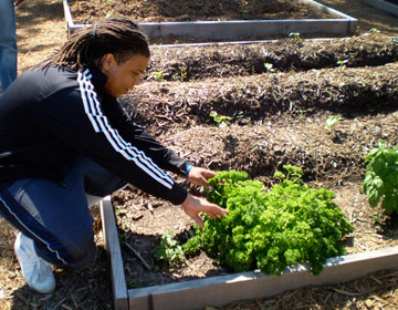 Philander Smith student Ahmad Williams works in the community garden. Photo by Shareese Kondo.