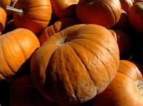 Pumpkins from Richard Hamby's farm are on their way to United Methodist churches across the U.S.