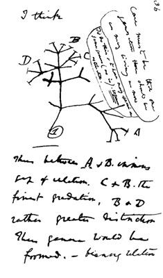 Charles Darwin's first diagram of an evolutionary tree from his First Notebook on Transmutation of Species (1837) on view at the Museum of Natural History in Manhattan. Web-only photo courtesy of Wikipedia.