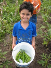 Boy harvests okra on his family's farm in Brazil. Photo courtesy of Grassroots International.