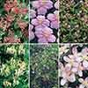 Complete Climbing Plant Collection