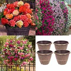 Complete Patio Bedding Collection with Planters & Fertiliser