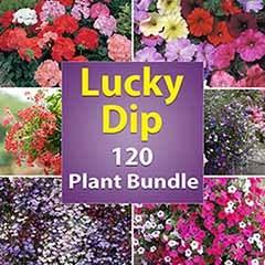 Lucky Dip Bedding Plant Bundle
