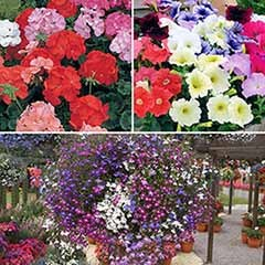 Complete Bedding Plant Bundle