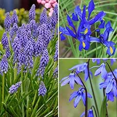 'Forever Blues' themed bulb collection x 100