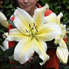 Giant Flowered Liliy Big Brother