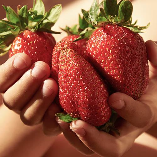 Strawberry Sweet Colossus