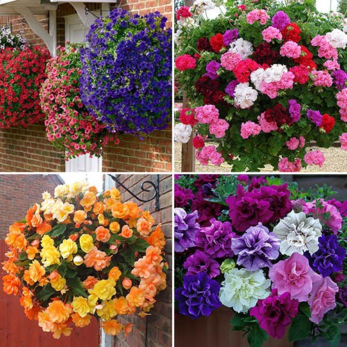 Image of 96 Best-Sellers Bedding Plant Bundle - 24 each