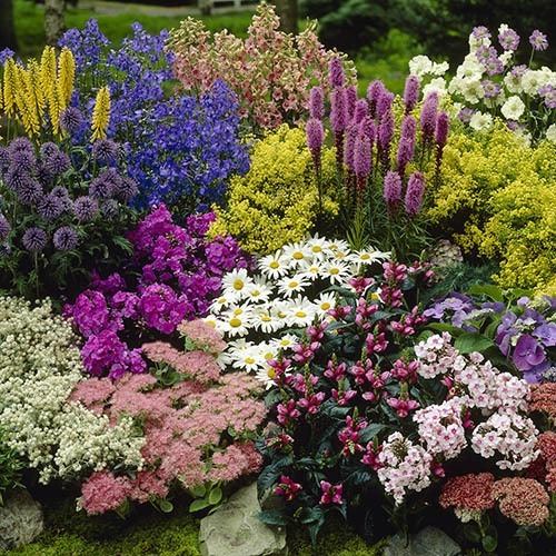 Image of 100 Perennial Plug plant bundle