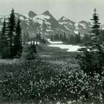 Tatoosh Range from Mazama Ridge, Mt Rainier Nat. Park.