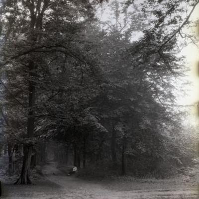 Cobhouse Woods