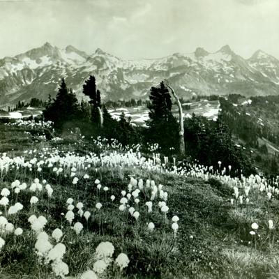 Tatoosh Range, Mt. Rainier Nat. Park.