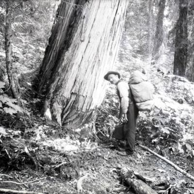 Gus Anderson - Cedar Tree - Devil's Club - 1st luncheon stream