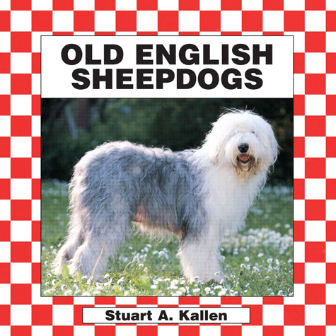 English Sheepdogs
