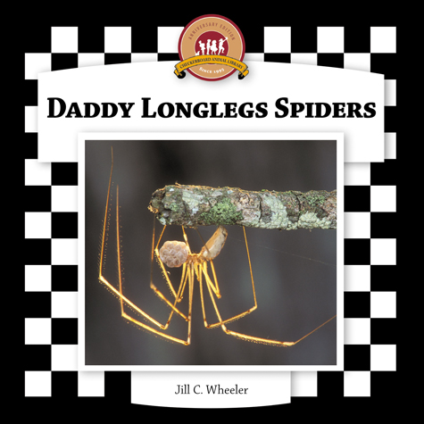 Daddy Longlegs Spiders