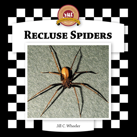 Recluse Spiders