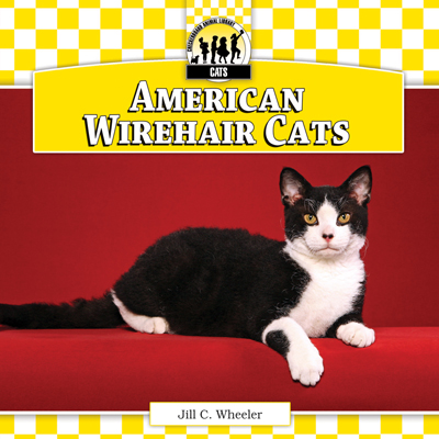 American Wirehair Cats