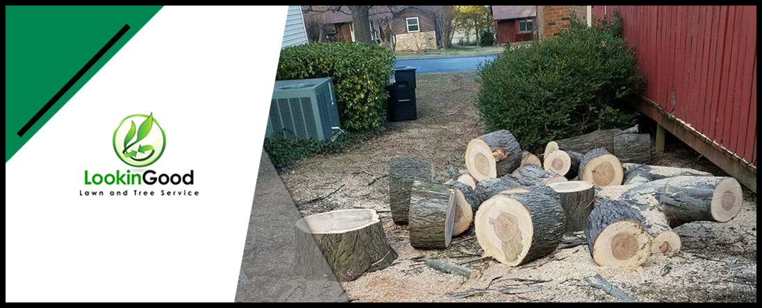 Lookin Good Lawn and Tree Service Offers Stump Removal in Nashville, TN