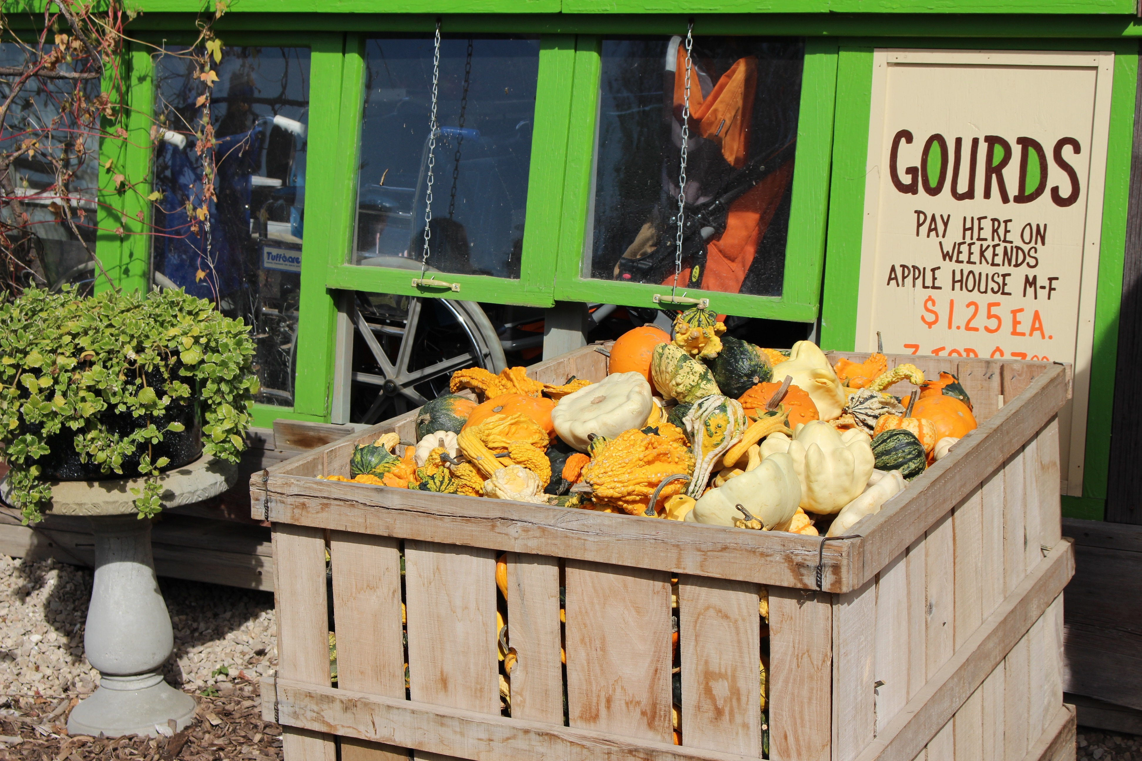 Little Farmer Orchard Outing 10/10/15