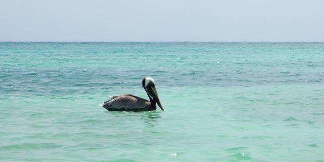 Boca Grandi, Aruba - 2