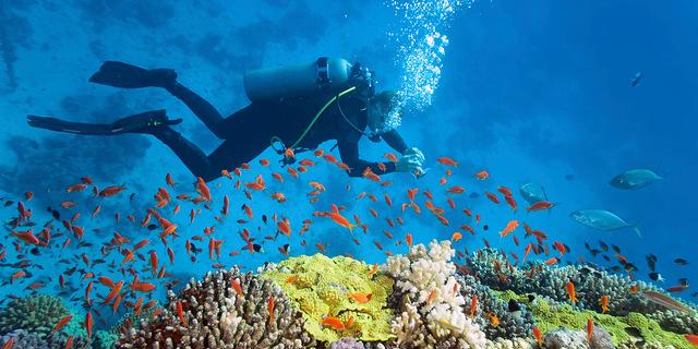 Bahama Adaları