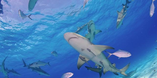 Köpekbalığı cennetine hoşgeldiniz!