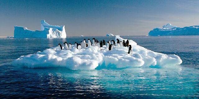 Kutuplarda penguenler bile özgürce koşamıyorken kayak yapmayı bekleyemezdik değil mi?