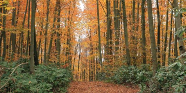 Burası Istranca Ormanları
