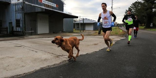 Ludivine 2,5 yaşında Bloodhound cinsi bir köpek