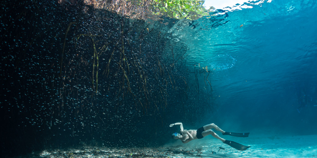 Yatay dalış örneklerinden biri
