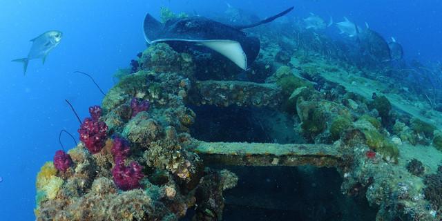 SS Yongala artık balıklara hizmet veriyor