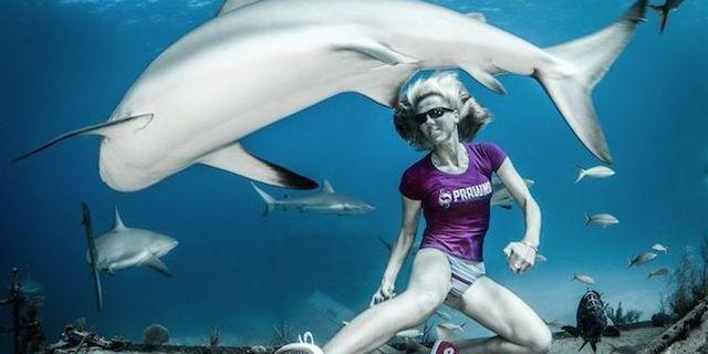 Köpekbalığı meleği