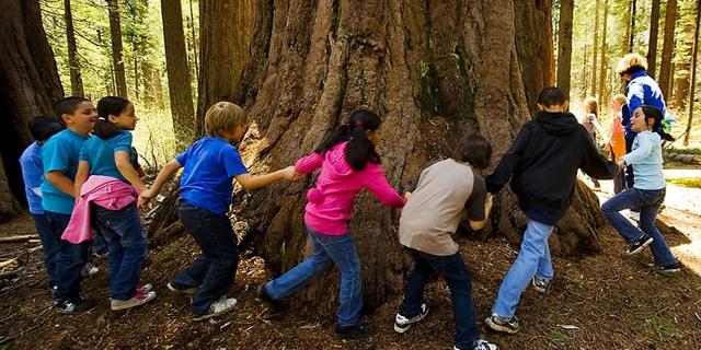 Ağaçlara sarılalım