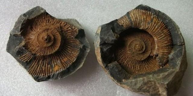 Kaşif Noel Odell tarafından 1924'te Everest'teki fosiller keşfedildi