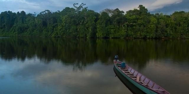 Surinam Yağmur Ormanları