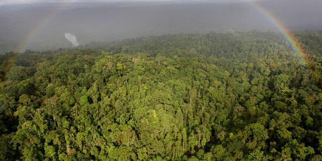 Papua Yeni Gine Ormanları