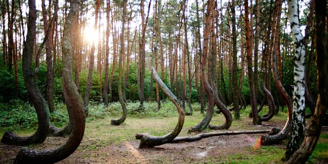 Crooked Ormanı